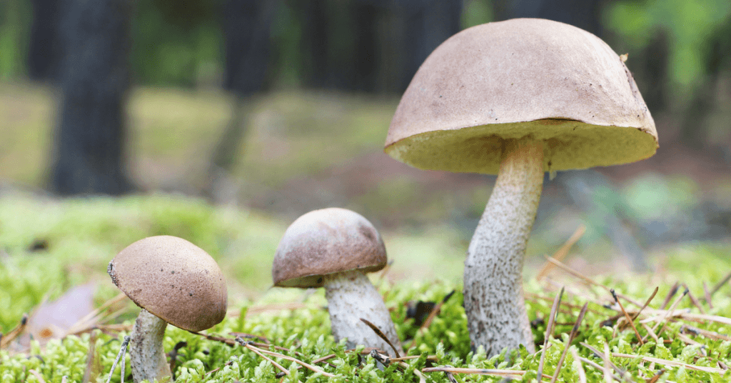 how-to-get-rid-of-mushrooms