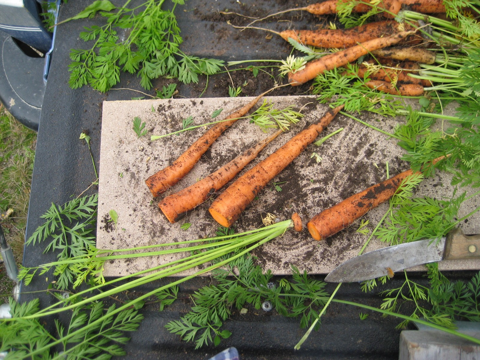 Cut Off Carrots Leaves