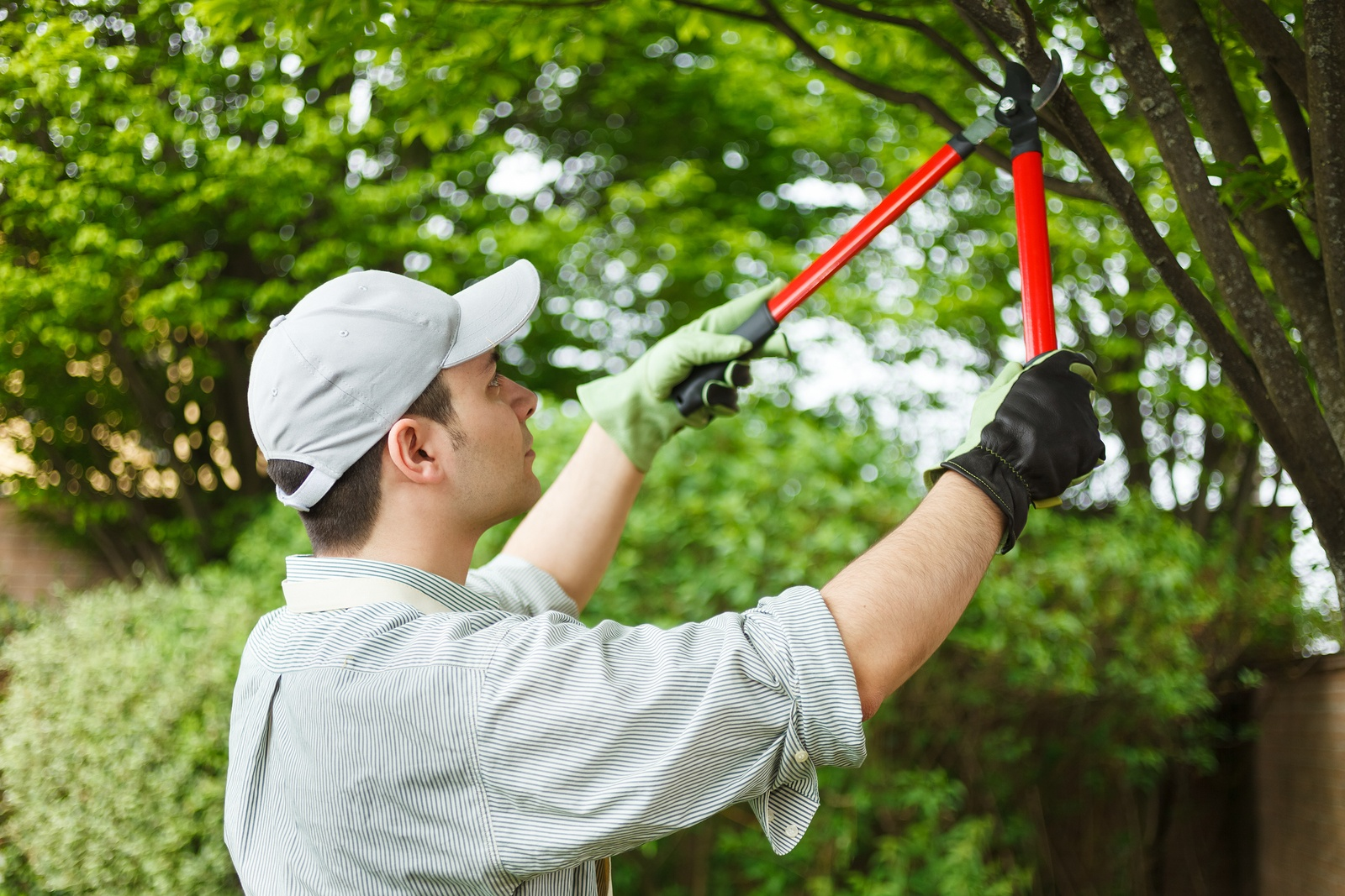 Trimming Branches