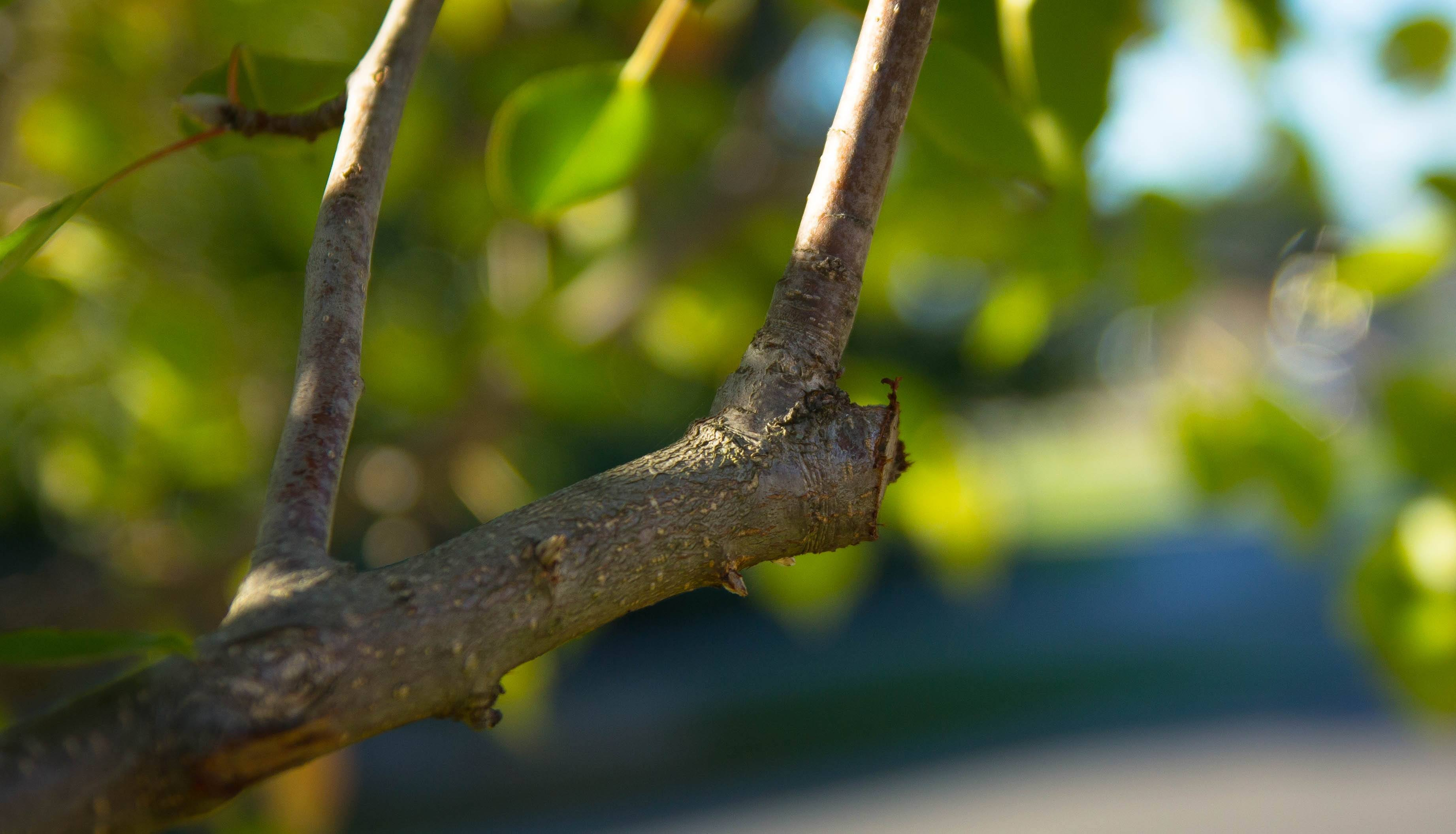 How Much Should You Prune