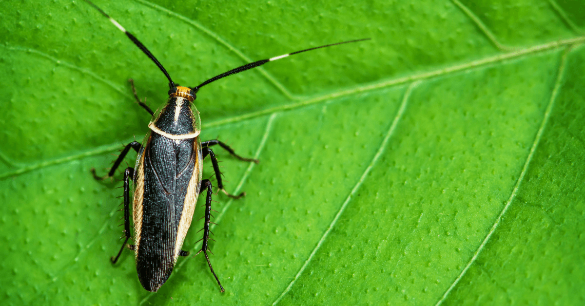 how-to-get-rid-of-palmetto-bugs