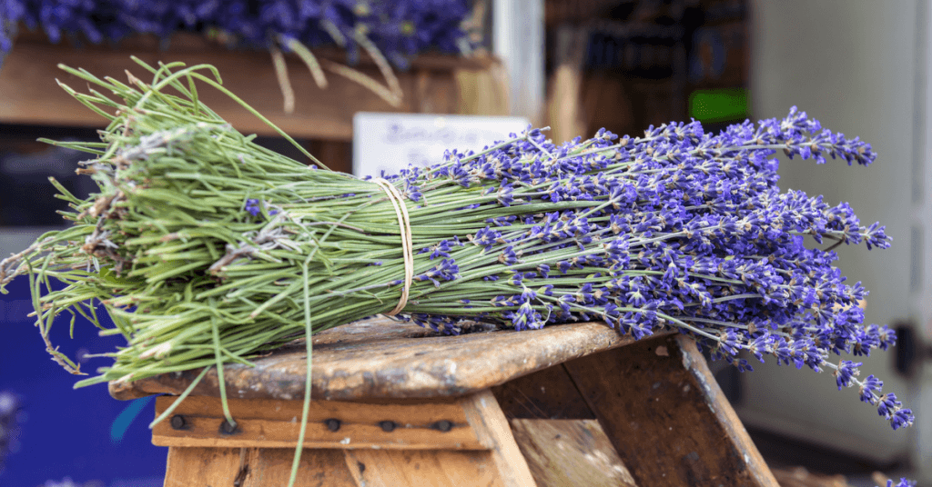 when-does-lavender-bloom