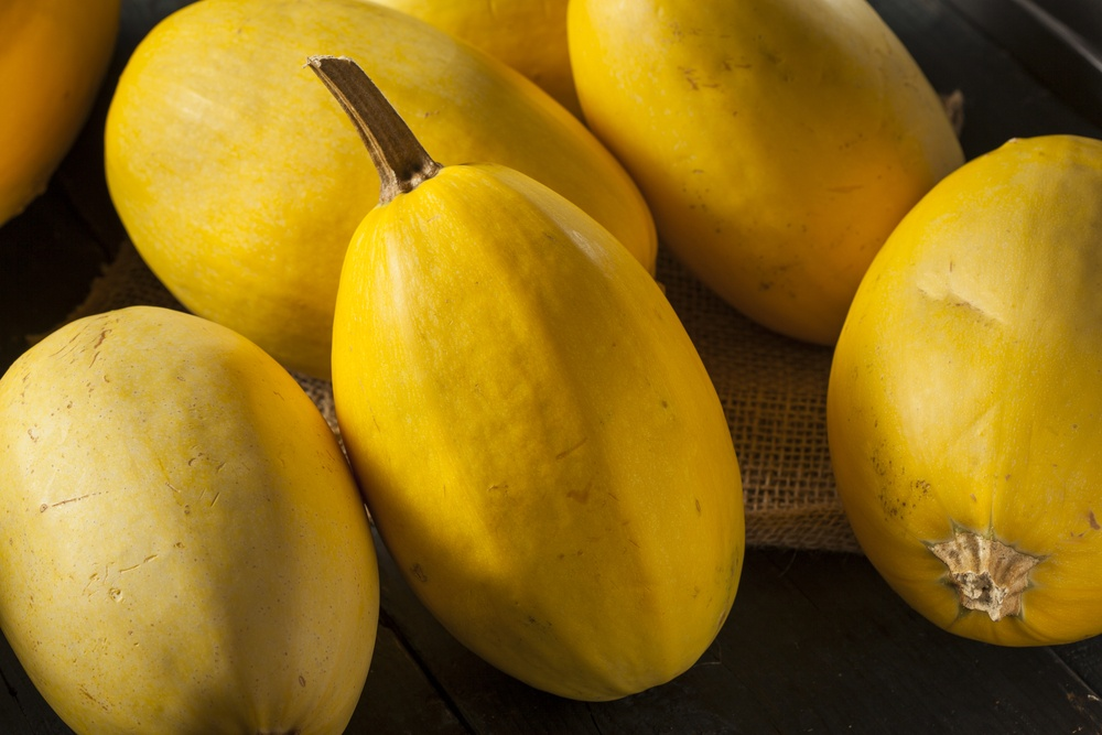 Time to Harvest Spaghetti Squash