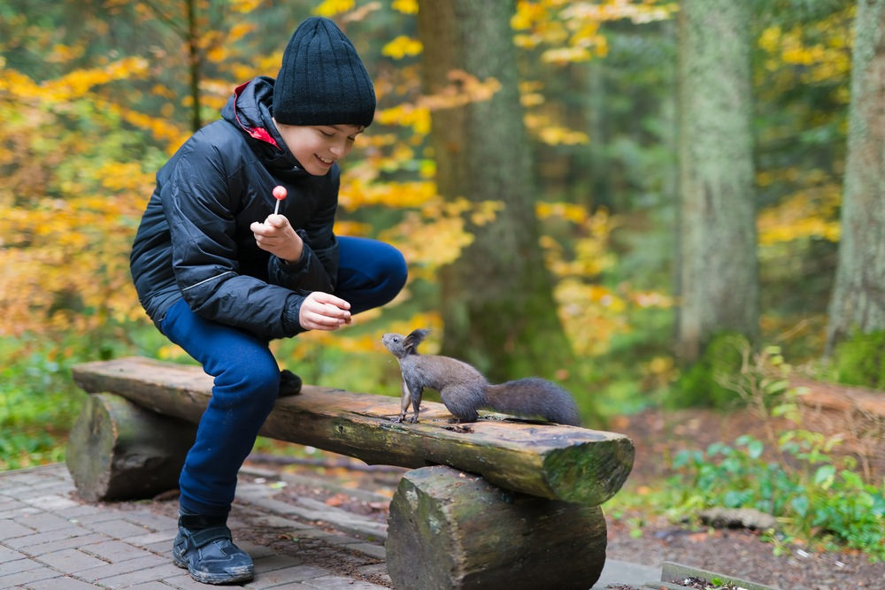 The Boy Feeds A Squirrel With Nutlets