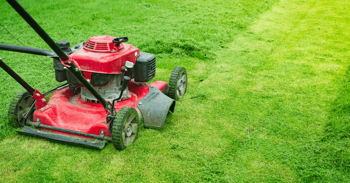 When To Mow New Grass Use These Key Factors To Determine