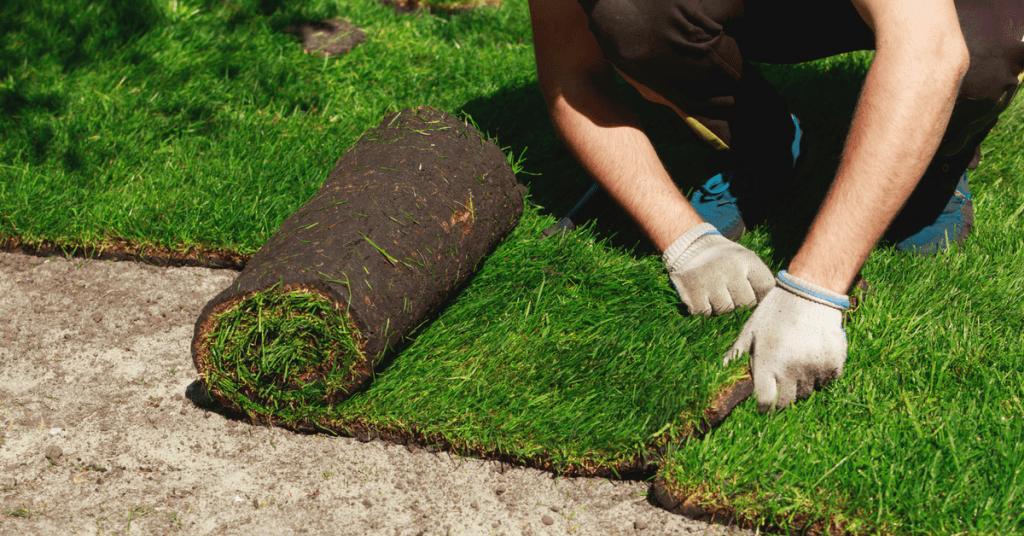 carpet-lawn