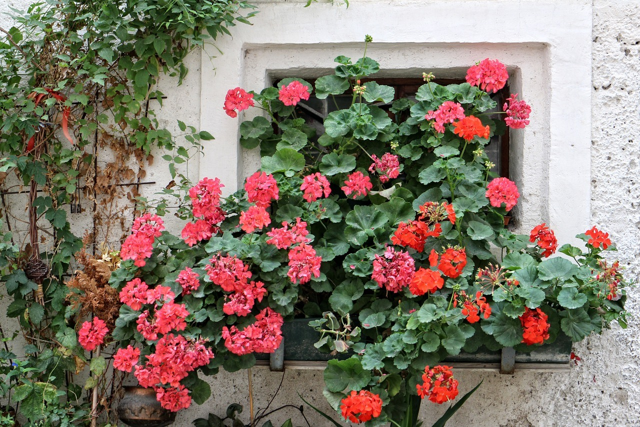 Annuals Flower Window Box