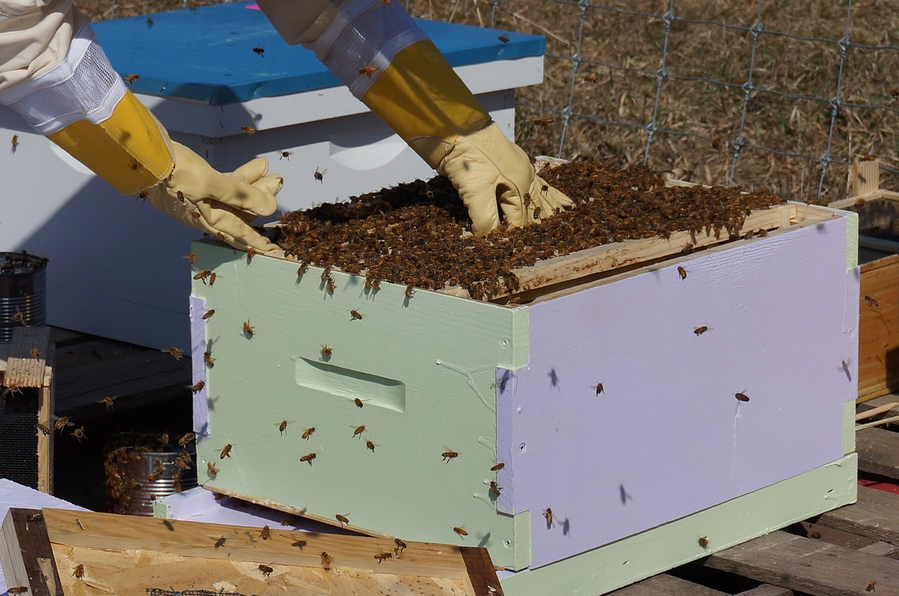 Removing Bee Hive