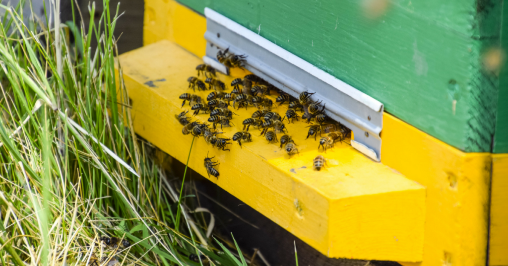 how-to-get-rid-of-bees