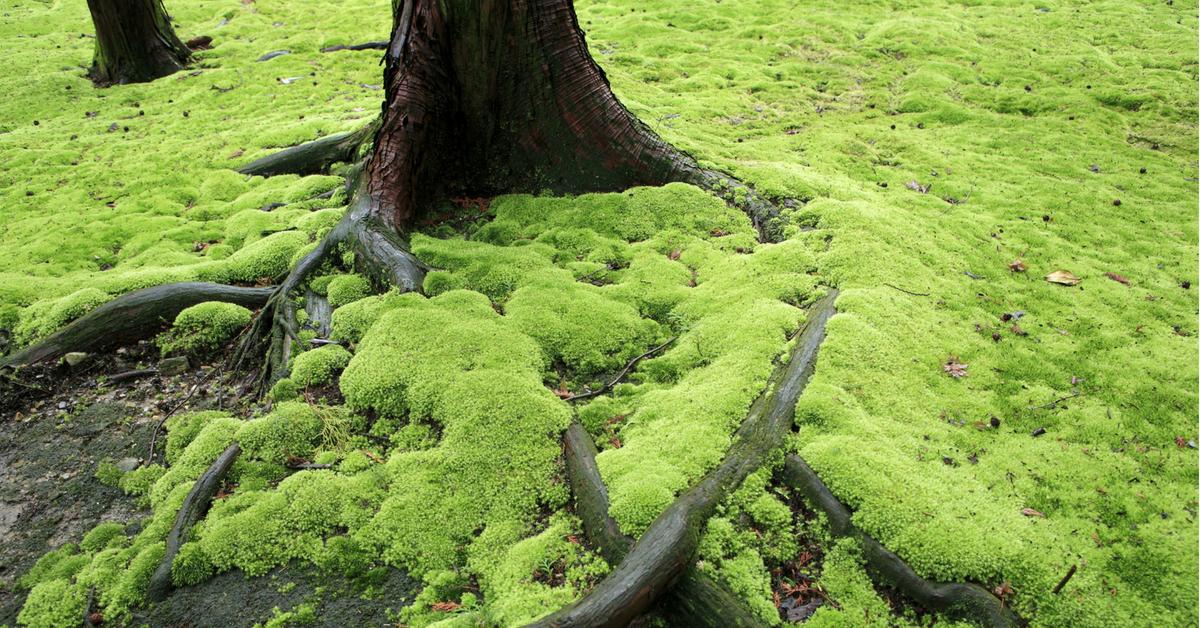how to grow an indoor moss garden humid garden. Black Bedroom Furniture Sets. Home Design Ideas
