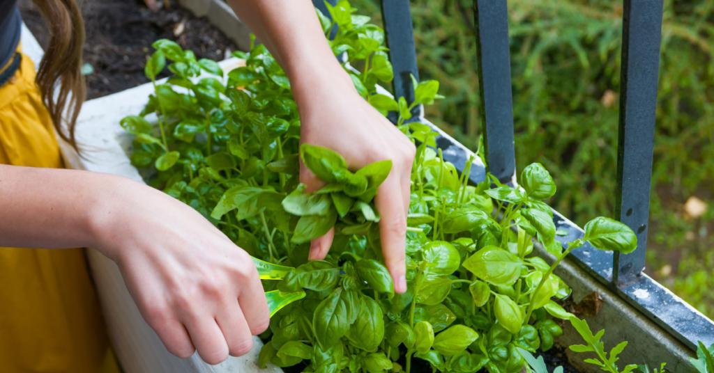 grow-a-garden-in-singapore
