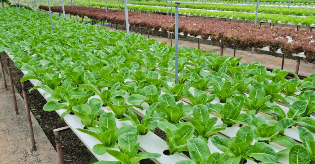 aquaponics-gardening