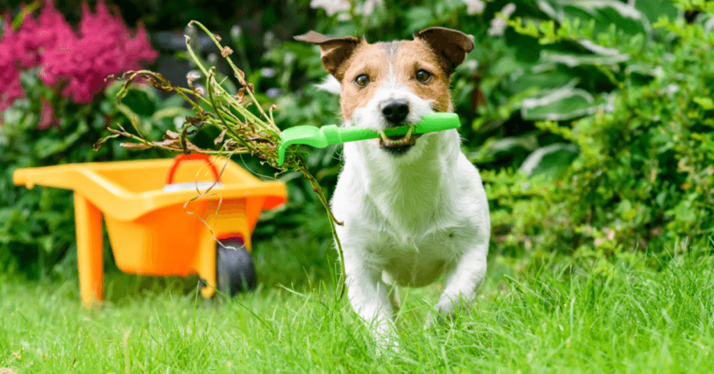 how-to-ensure-your-garden-is-dog-safe