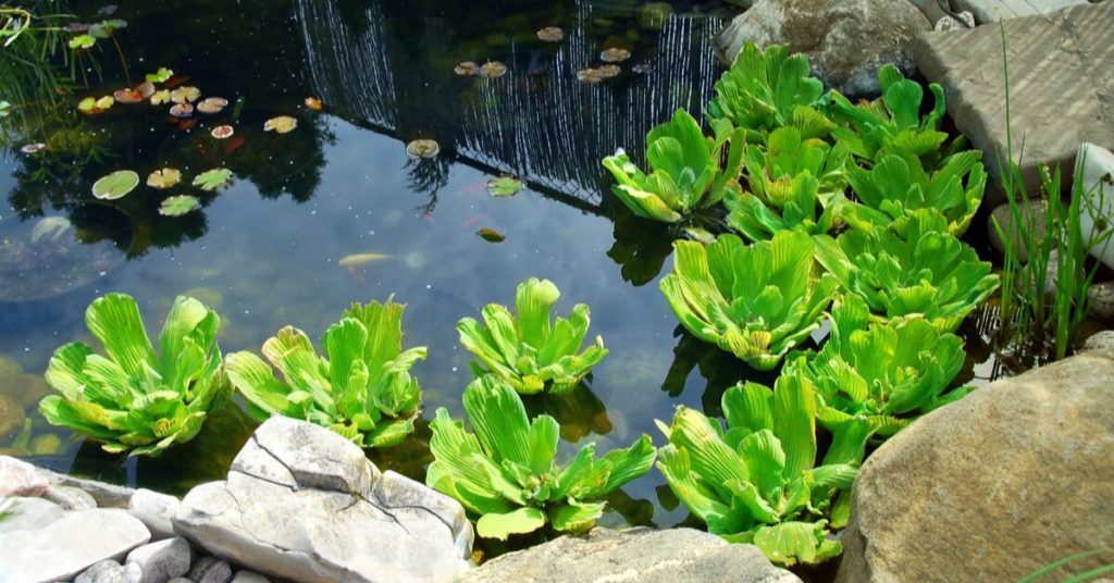 creating-a-pond