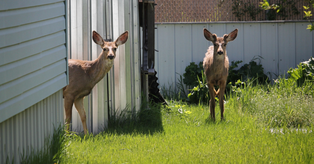 deer-fence-education-how-to-keep-deer-out-of-your-garden