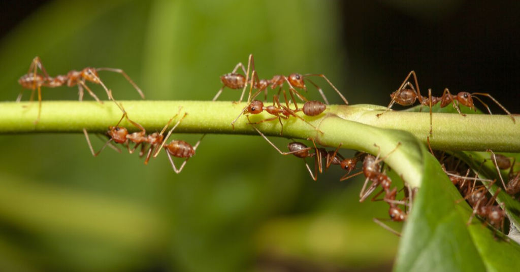 how-to-get-rid-of-ants-in-the-garden