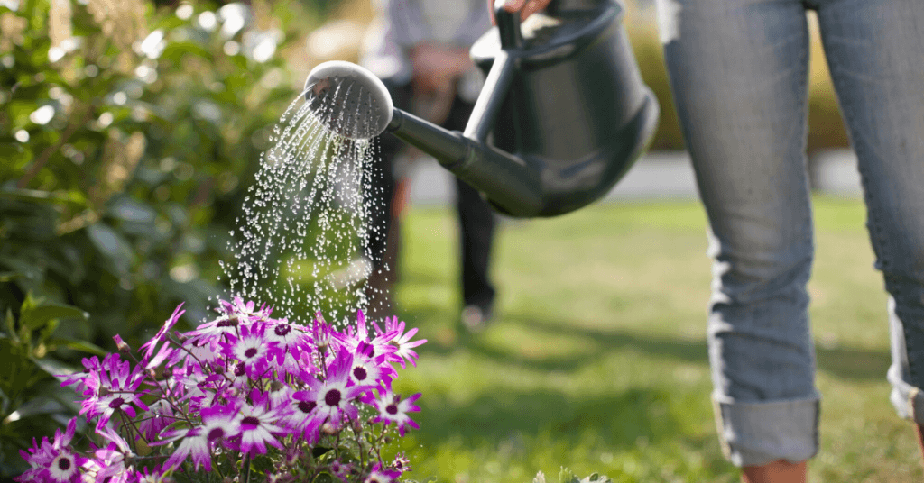 take-care-of-your-garden-plants