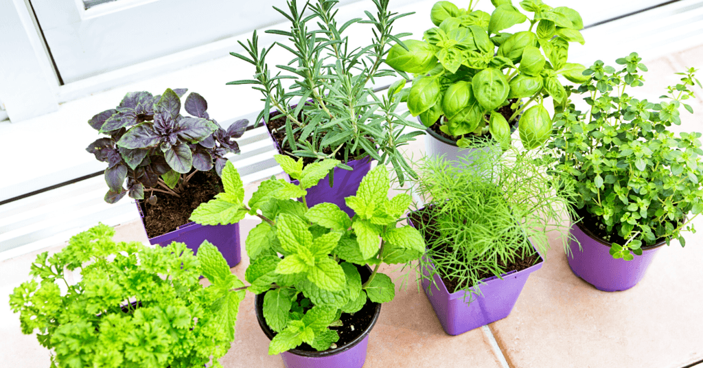 what-can-you-grow-in-a-home-garden