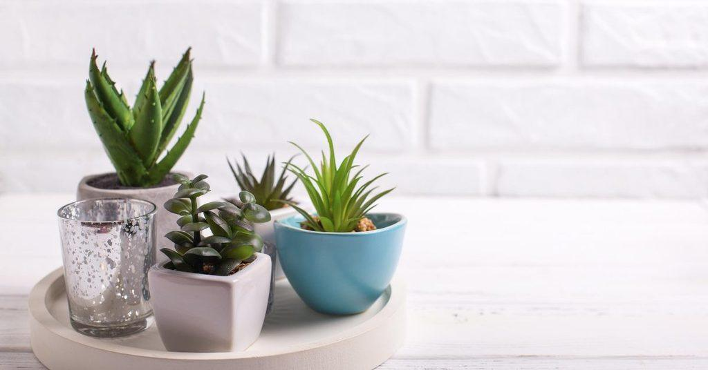 ways-to-add-indoor-plants-into-your-home-design