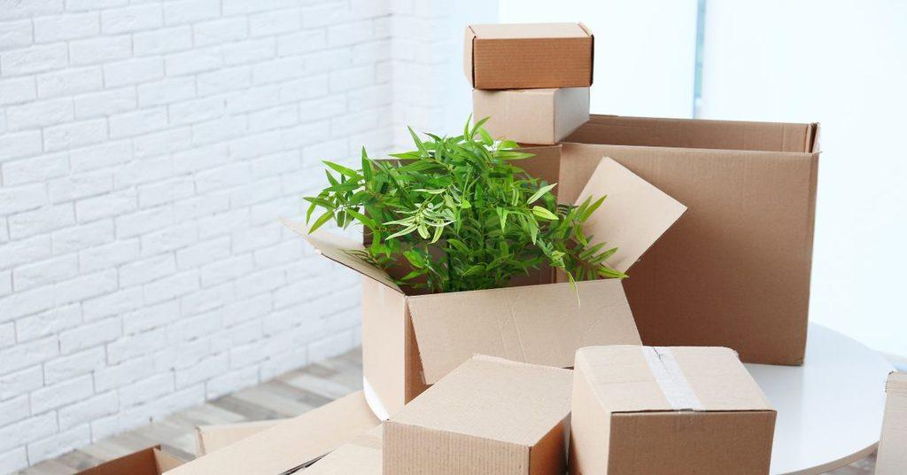 what-to-know-about-moving-with-plants