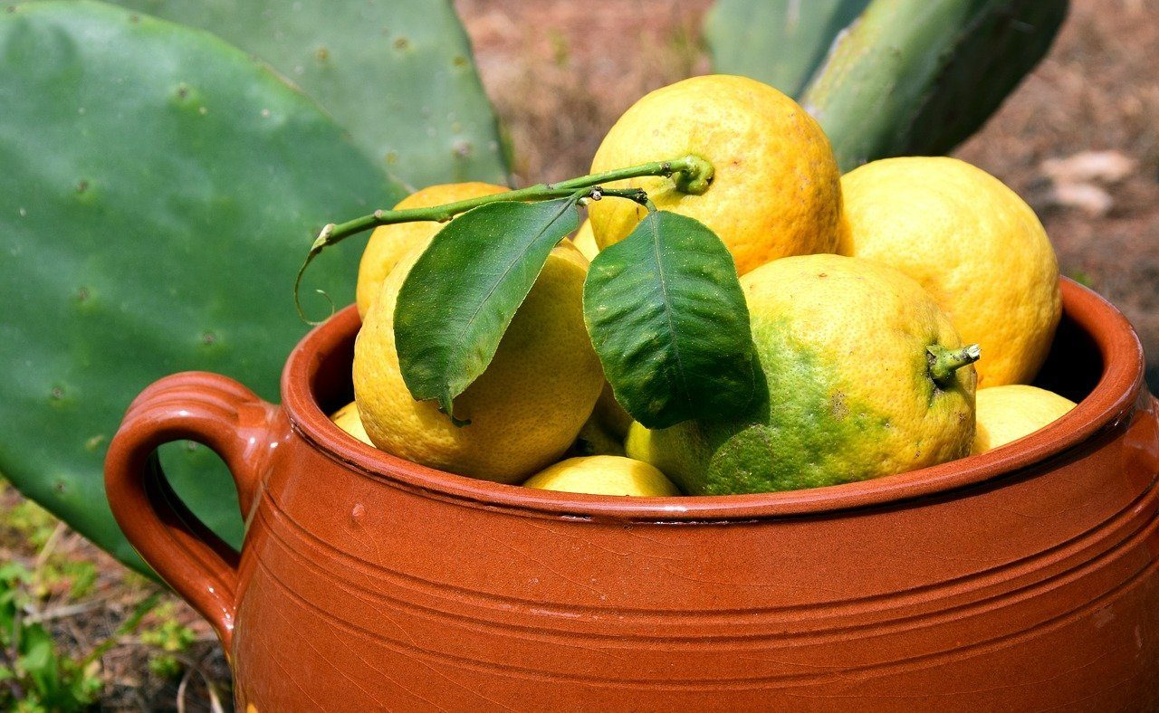 lemon-fruit