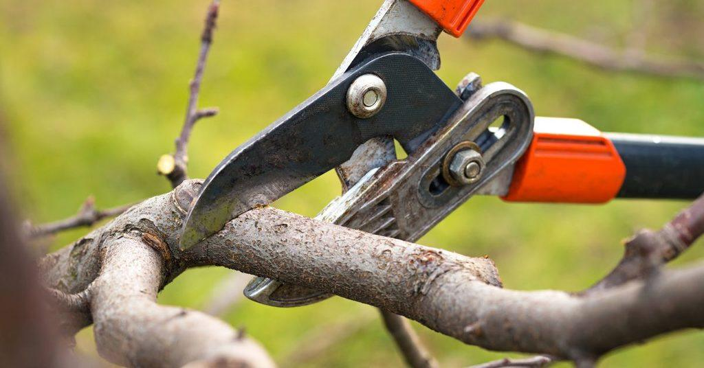 difference-between-pruning-and-trimming