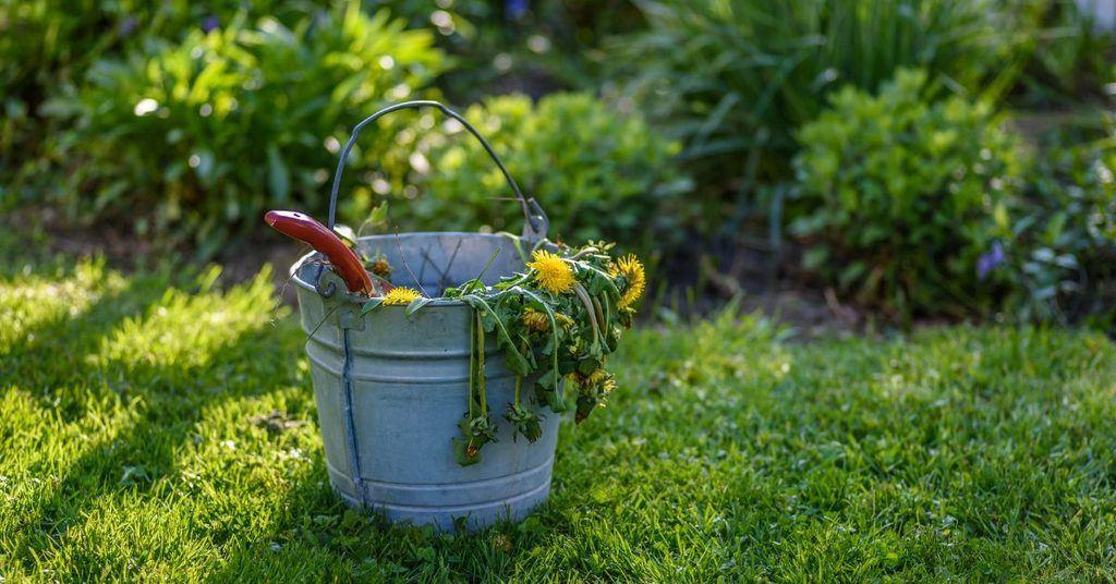 how-to-keep-garden-weeds-under-control