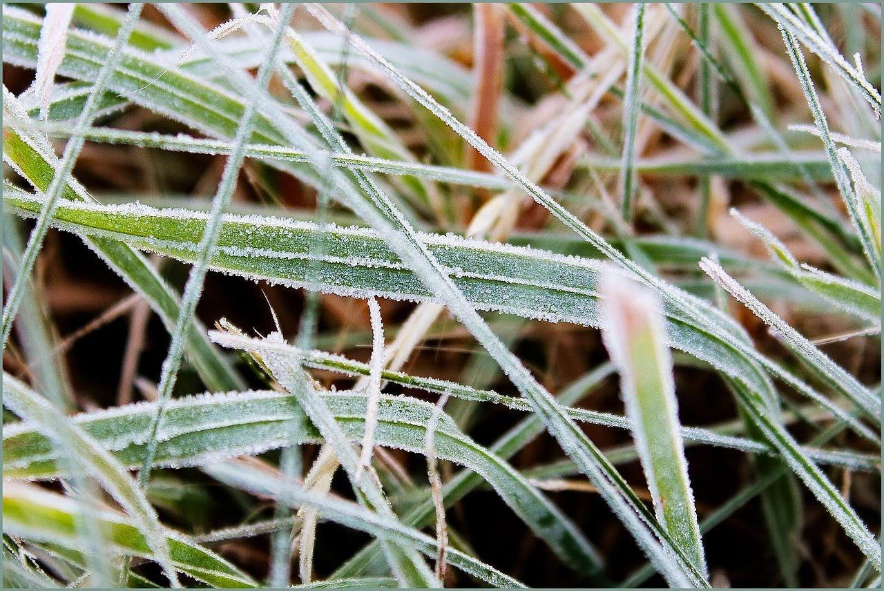 grass-icing