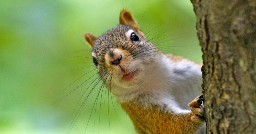 how-to-keep-squirrels-out-of-your-garden